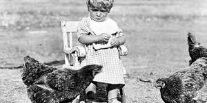 Ernest feeds the chickens, Alberta 1923