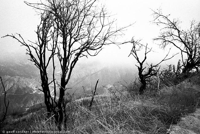 Mt. Lukens - trees in fog - April 2011