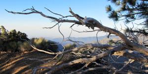 Branches, Mt. Williamson