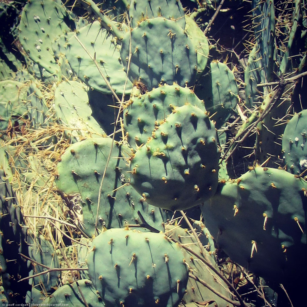 Arroyo Seco Cactus Ultraholiccom