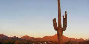 Saguaro, runners, sunrise