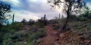 trail near dusk