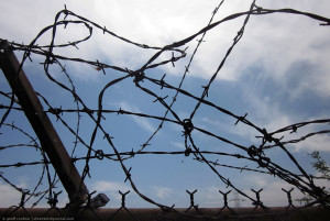 Barbed Wire at Whittier Narrows