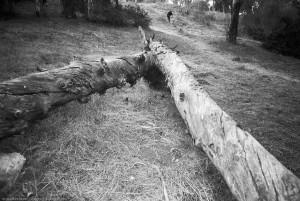 Logs, Elysian Park