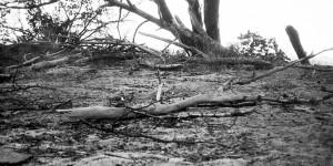 Burned wood, Griffith Park
