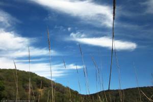 Grass Stalks, Topanga