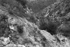 Mount Lukens hillside