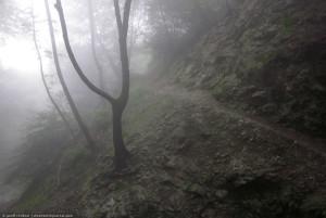 Henninger Flats fog