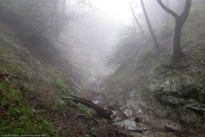 Henninger Flats trail in fog