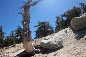 Near Tahquitz Peak