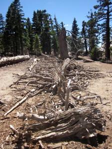 Tree Boneyard