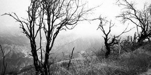 Mt. Lukens - trees in fog - April 2011