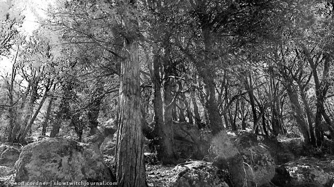 Silver Moccasin Trail Between Shortcut & Charlton Flats