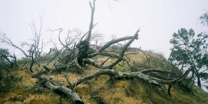 Trees, mile 18