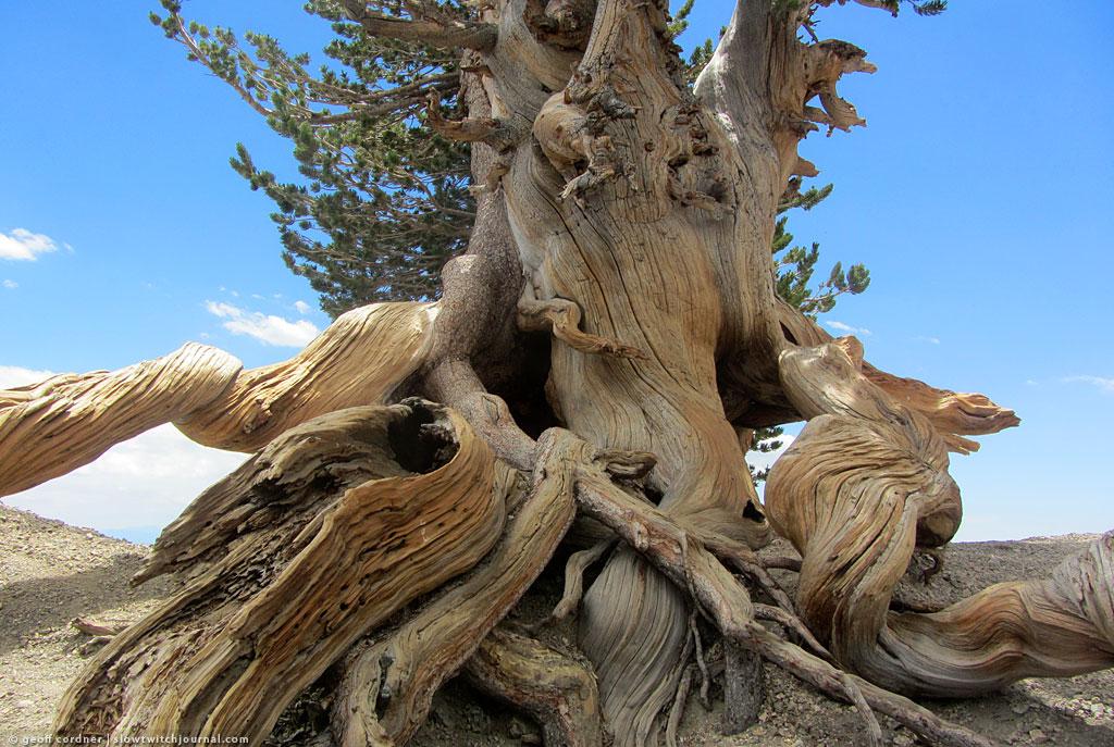 Wally Waldren Tree