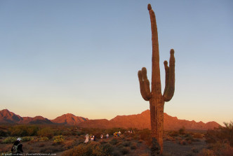 Saguaro, runners, sunrise