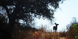 Deer on El Prieto