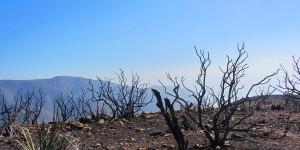 Burnt, Overlook, 2 weeks ago