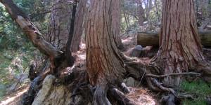 Burkhart Trail, mile 34