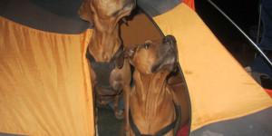 Jake & Pippa