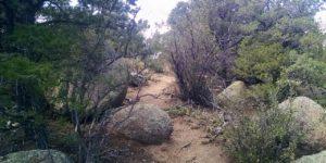 Oso Ridge Trail