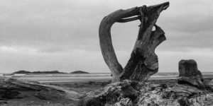 Driftwood, Vancouver Island, 1994