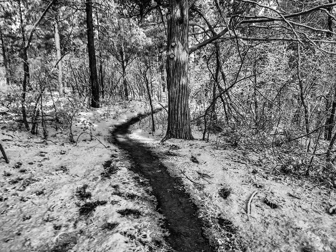 Snow on singletrack, Cedro Peak 50K